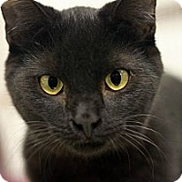 Adopt A Pet :: Zack - london, ON