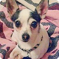 Adopt A Pet :: EMMY LOU - AUSTIN, TX