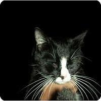 Adopt A Pet :: Favorite - Washington Terrace, UT