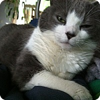 Adopt A Pet :: Sabrina - Plainville, MA