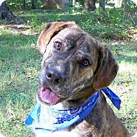 Adopt A Pet :: Adele - Mocksville, NC