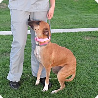 Adopt A Pet :: Frannie - Scottsdale, AZ