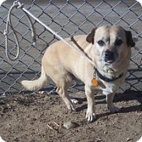 Adopt A Pet :: Dallas - Greeley, CO