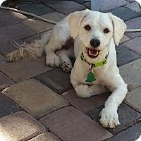 Adopt A Pet :: Austin 2 - Las Vegas, NV