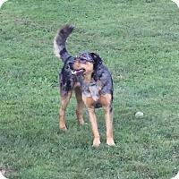 Adopt A Pet :: Hayden - North Haverhill, NH