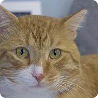 Adopt A Pet :: mango - Colorado Springs, CO