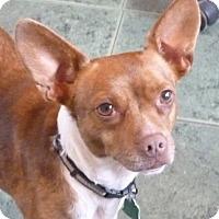 Adopt A Pet :: GLORIA - Cranford, NJ