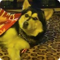 Adopt A Pet :: Rocky - Zanesville, OH