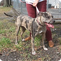 Adopt A Pet :: Molly - KANNAPOLIS, NC
