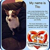 Adopt A Pet :: Tito - Clermont, FL