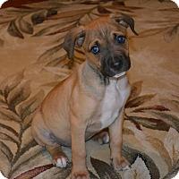 Adopt A Pet :: Samson - Warwick, NY