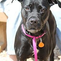 Adopt A Pet :: ANABELLE - Philadelphia, PA