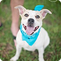 Adopt A Pet :: Skip - Kingwood, TX