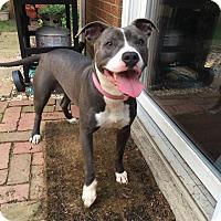 Adopt A Pet :: Kate - Dayton, OH