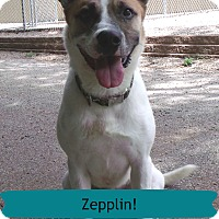 Adopt A Pet :: Zepplin - Muskegon, MI