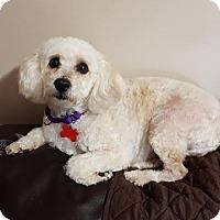 Adopt A Pet :: Kylee - Troy, MI