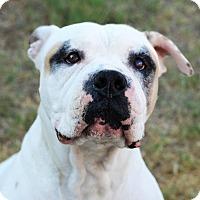 Adopt A Pet :: Mickey - Tempe, AZ