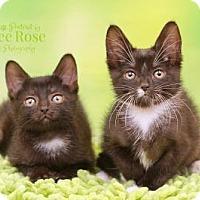Adopt A Pet :: Elvis & Pricilla - Sterling Heights, MI