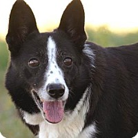 Adopt A Pet :: Maude - Colorado Springs, CO
