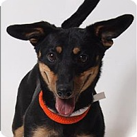 Terrier (Unknown Type, Small) Mix Dog for adoption in Columbus, Ohio - Lionel