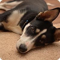 Adopt A Pet :: Bandit - Mooresville, NC