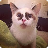 Adopt A Pet :: Zuri - Gainesville, FL