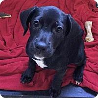 Adopt A Pet :: Erin - Thompson, PA