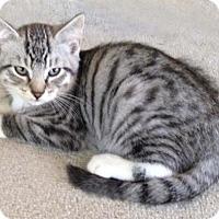 Adopt A Pet :: Skylar N. - Orlando, FL