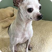 Adopt A Pet :: Brutus - Costa Mesa, CA