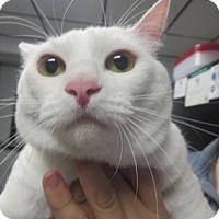 Adopt A Pet :: Rowdy - Lincolnton, NC
