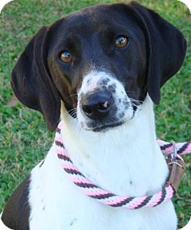 Hound (Unknown Type) Mix Dog for adoption in Red Bluff, California - Artimus
