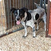 Adopt A Pet :: Oreo - San Dimas, CA