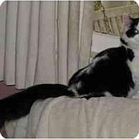 Adopt A Pet :: Sarah - Cincinnati, OH