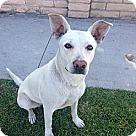 Adopt A Pet :: Scarlet