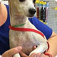 Adopt A Pet :: Fawn - Phoenix, AZ