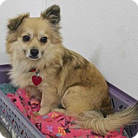 Adopt A Pet :: Gucci - Winters, CA