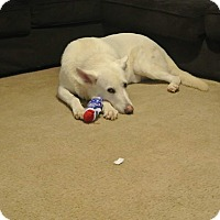 Adopt A Pet :: Ranger (Guest) - Roswell, GA