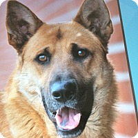 Adopt A Pet :: RUSTY VON RHODES - Los Angeles, CA