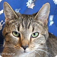 Adopt A Pet :: Summer - Bedford, VA