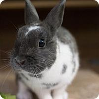 Adopt A Pet :: Gracie - Holbrook, NY
