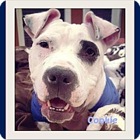 Adopt A Pet :: Cookie - Memphis, TN