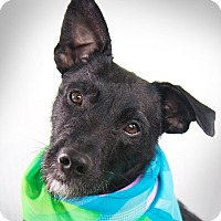 Terrier (Unknown Type, Medium) Mix Dog for adoption in Portland, Oregon - Jellybean