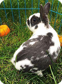Polish for adoption in Pasco, Washington - Quincy