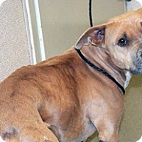 Adopt A Pet :: Mabeline - Wildomar, CA