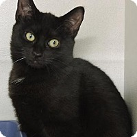 Adopt A Pet :: Roselina - Massapequa, NY
