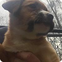 Adopt A Pet :: Cupid - Smithtown, NY