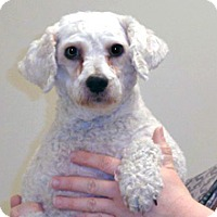 Adopt A Pet :: Le Stat - Wildomar, CA