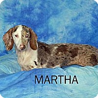 Adopt A Pet :: Martha - Ft. Myers, FL