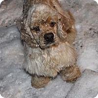 Adopt A Pet :: Dragon - Menomonee Falls, WI