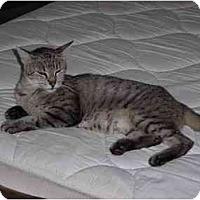 Adopt A Pet :: Tabitha - Garland, TX